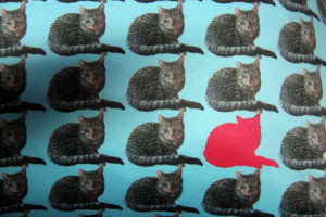Woof. Massive Dog. Pet Design. Pet cushions, bespoke pet cushion, cat designs, cats on cushions, blue cushions, pink cushions, pet interior design, pets on fabric, pets on cushions, unique pet gifts, pet gift ideas, swin, claireswindale, claire swindale