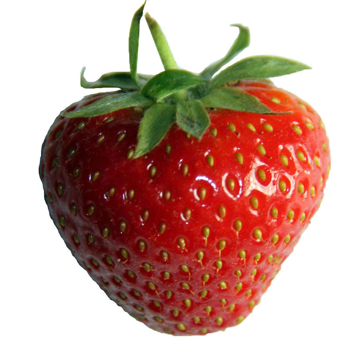Wimbledon Strawberries Fabric