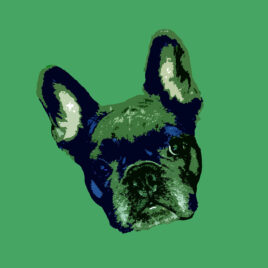 Pop Art style images of a French bulldogs head tilted left with 50s green background