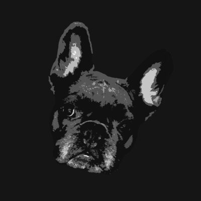 Pop Art Style image of a French Bulldogs face tilted right on black background
