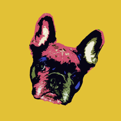 Pop Art Style image of a French Bulldogs face tilted left on English Mustard background
