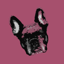 Pop Art Style image of a French Bulldogs face tilted left on delicious Pink background