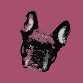 Pop Art Style image of a French Bulldogs face tilted right on delicious background